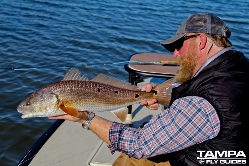 Fly fishing shallow water redfish tampa fly guides for Tampa fly fishing