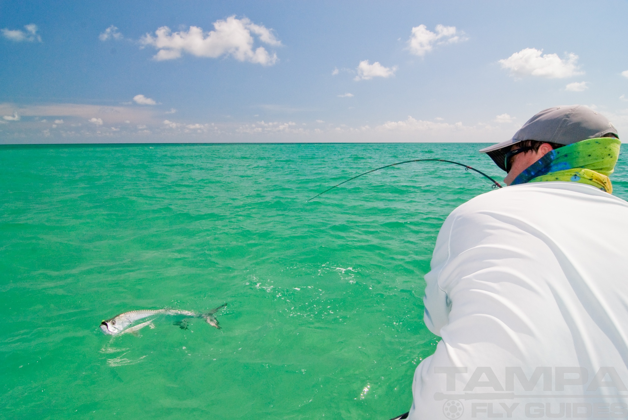 Tampa bay tarpon tampa fly guides for Fly fishing bay area