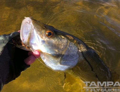 Media tampa fly guides for Tampa fly fishing