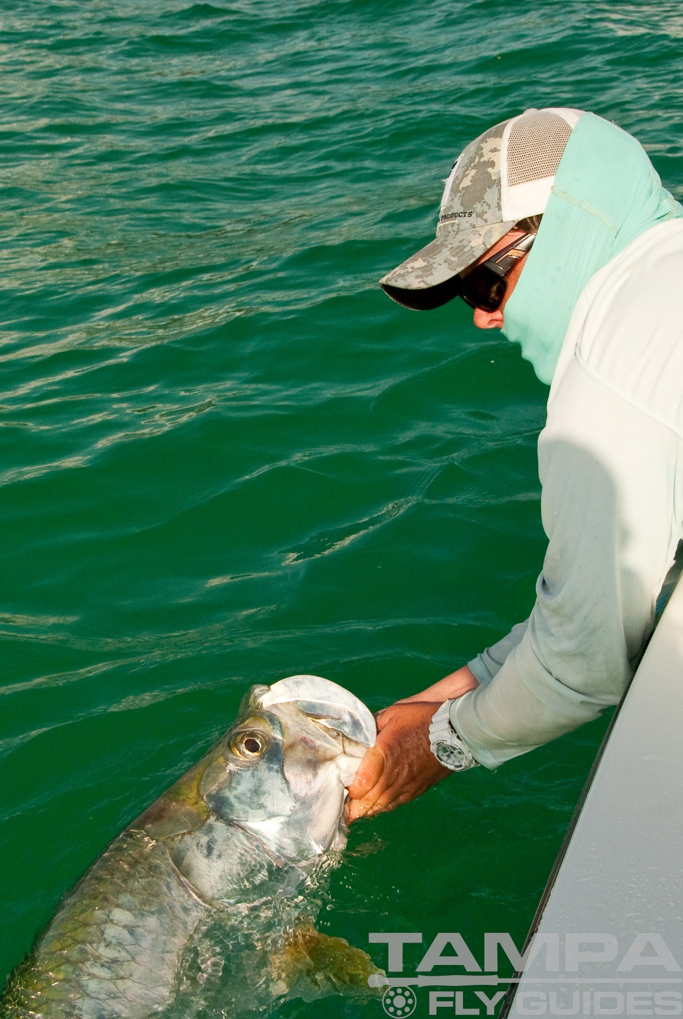 Tampa bay tarpon tampa fly guides for Tampa bay fishing outfitters