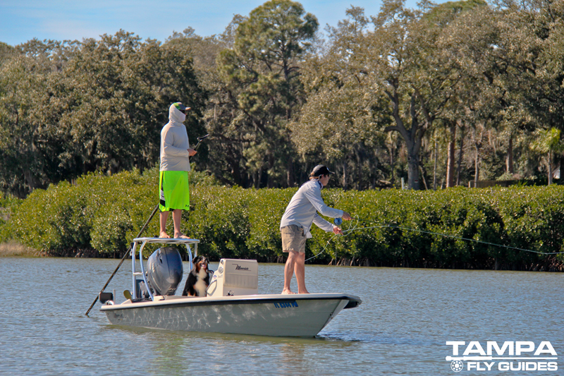 Tampa-Fly-guides-redfishing